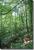 Traumpfad Waldschluchtenweg - Wandern zwischen Wald und Wasser