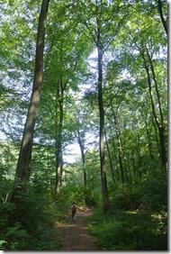 Traumpfad Waldschluchtenweg - Buchenwald