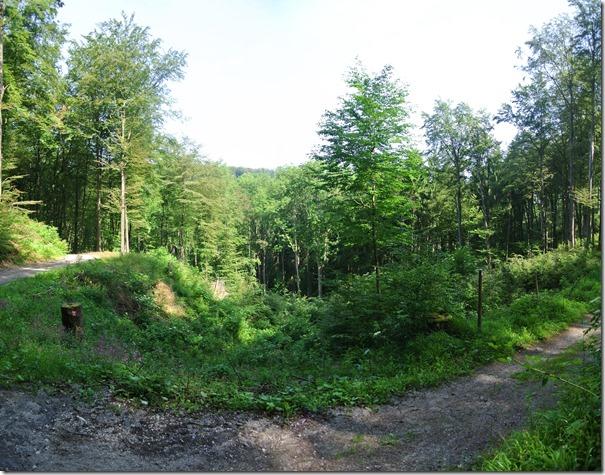 Traumpfad Waldschluchtenweg - Abstieg ins Tal