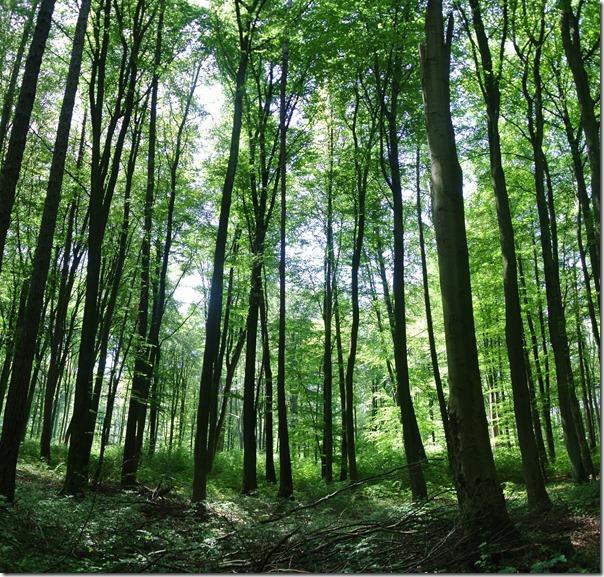 Traumpfad Waldschluchtenweg - Kathedralenwald