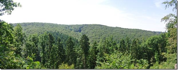 Traumpfad Waldschluchtenweg - Bewaldete Talrücken
