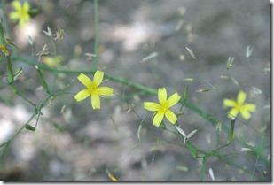 Traumpfad Waldschluchtenweg - Mini-Blumen