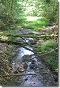 Traumpfad Waldschluchtenweg - Feisternachtbach