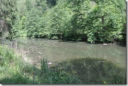 Traumpfad Waldschluchtenweg - Teich