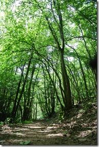 Moselsteig Treis-Karden - Moselkern - Wald am Steig