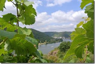 Moselsteig Treis-Karden - Moselkern - Weinreben und Mosel