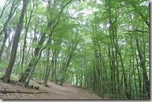 Fürstenweg - Waldweg