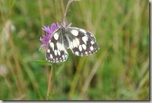 Fürstenweg - Schmetterling