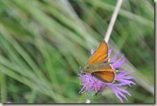Fürstenweg - Schmetterling 2