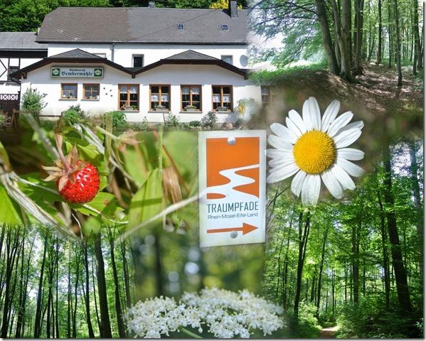 Traumpfad Waldschluchtenweg - Collage