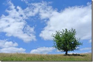 Moselsteig Schweich - Mehring - Baum und Himmel