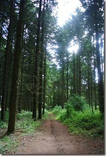 Traumpfad Vier-Berge-Tour - Waldweg