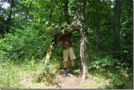 Traumpfad Vier-Berge-Tour - A-Eiche