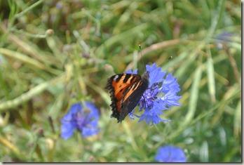 Traumpfad Vier-Berge-Tour - Schmetterling