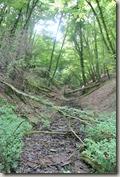 Moselsteig Felsen. Fässer. Fachwerk - Bach im Wald