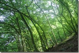 Moselsteig Felsen. Fässer. Fachwerk - Wald und Licht