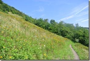 Traumschleife Mittelrhein Klettersteig - Weiter im Hang