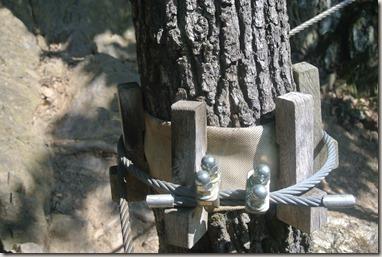 Traumschleife Mittelrhein Klettersteig - Seilführung um einen Baum