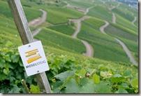 Moselsteig Traben-Trarbach - Ürzig - Moselsteiglogo und Weinberge