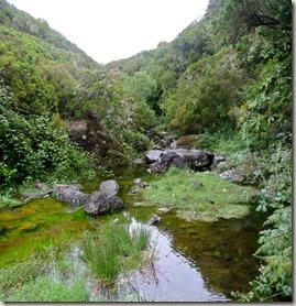 Madeira Wanderung - 25 Quellen - sattes Grün