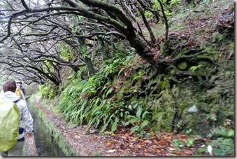 Madeira Wanderung - 25 Quellen - an Bäumen vorbei