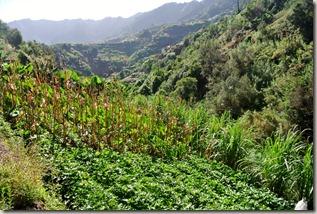 Madeira Wanderung - Felder am Hang