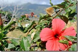 Madeira Wanderung - Blütenpracht