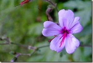 Madeira Wanderung Caldeirao Verde - auch hier exotische Blumen