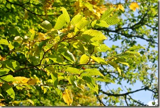 Traumpfad Booser Doppelmaartour - Herbstlaub