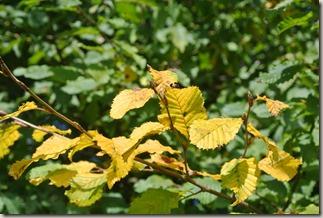 Traumpfad Booser Doppelmaartour - grün und gelb