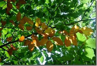 Traumpfad Booser Doppelmaartour - und wieder Herbstlaub