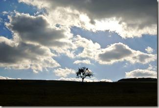 Keramikroute Königfeld - Baum und Himmel