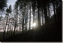 Traumschleife Lücknerweg - Licht und Wald