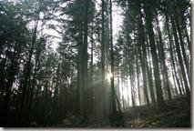 Traumschleife Lücknerweg - Stimmungsvoll