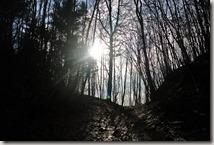 Traumschleife Lücknerweg - Morgens im Wald