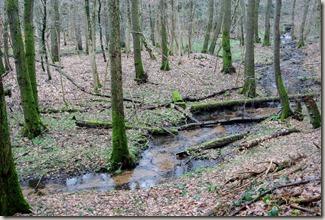 Traumschleife Lücknerweg - Wasser und Wald