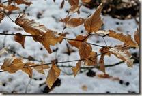 Traumschleife Lücknerweg - Blätter und Schnee