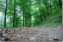 Bürresheimer Weg - Herrlicher Buchenwald