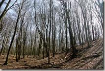 Traumpfad Waldseepfad Rieden - Wald