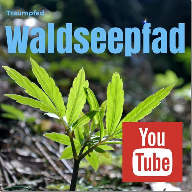 Traumpfad Waldseepfad Rieden - Teaser YouTube