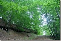 Wandern in Brohltal (Weibern) -  Waldweg