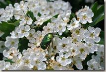 WällerTour Bärenkopp - Kirchblüten