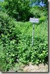 Kulturlandweg Sieg - Dienstweg