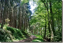 Kulturlandweg Sieg - Waldweg