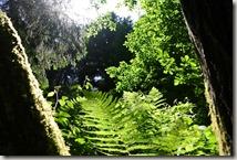 Kulturlandweg Sieg - Im Wald