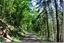 Pulvermühlenweg Sieg - Waldweg