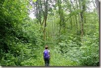 Erlebnisweg Burgweg - im Wald