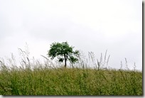 Erlebnisweg Burgweg - Baum auf Hügel