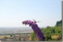 Traumpfad Pellenzer Seepfad - Schmetterling
