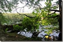 Traumpfad Pellenzer Seepfad - Ufer des Laacher Sees